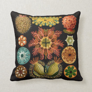 Haeckel Echinoderm pillow