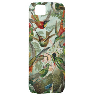Haeckel Hummingbirds Barely There iPhone 5 Case
