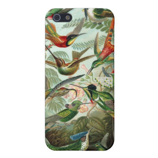 Haeckel Hummingbirds iPhone 5 Cases
