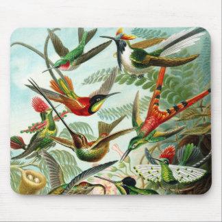 Haeckel Hummingbirds Mouse Mat