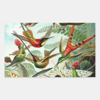 Haeckel Hummingbirds Rectangular Sticker