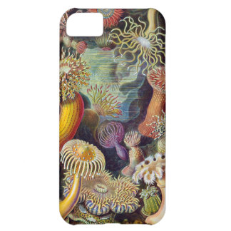 Haeckel iPhone 5C Case