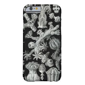 Haeckel iPhone 6 case - Gorgonida Barely There iPhone 6 Case