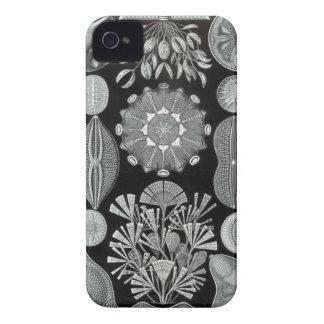 Haeckel iPhone Case - Diatomea