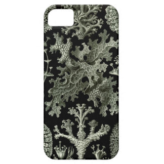Haeckel iPhone Case - Lichenes