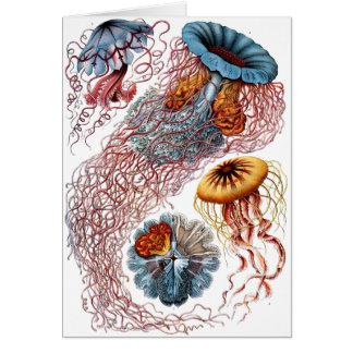Haeckel Jellyfish Greeting Card