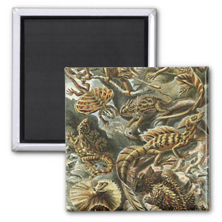 Haeckel Lizard Bearded Dragon Iguana Painting Magnet