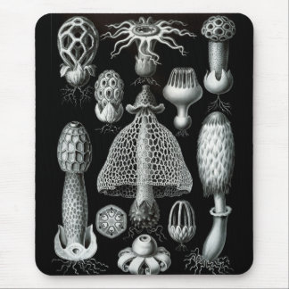 Haeckel Negative Mouse Mat