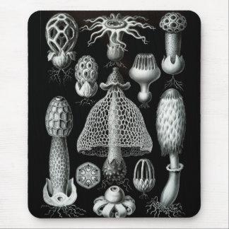Haeckel Negative Mouse Mat