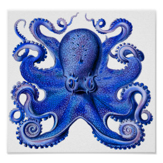Haeckel Octopus Blue Poster