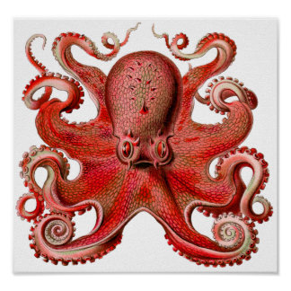 Haeckel Octopus Red Poster