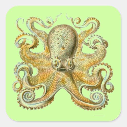 Haeckel Octopus Sticker