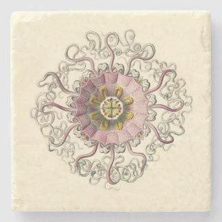 Haeckel Peromedusa Coaster Stone Coaster