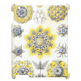 Haeckel Polycyttaria Cover For The iPad