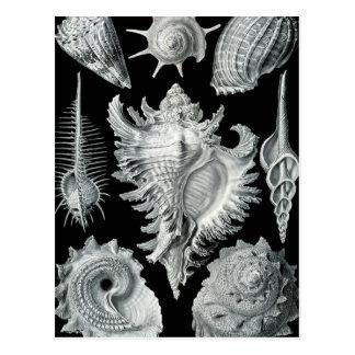 Haeckel Prosobranchia Post Card