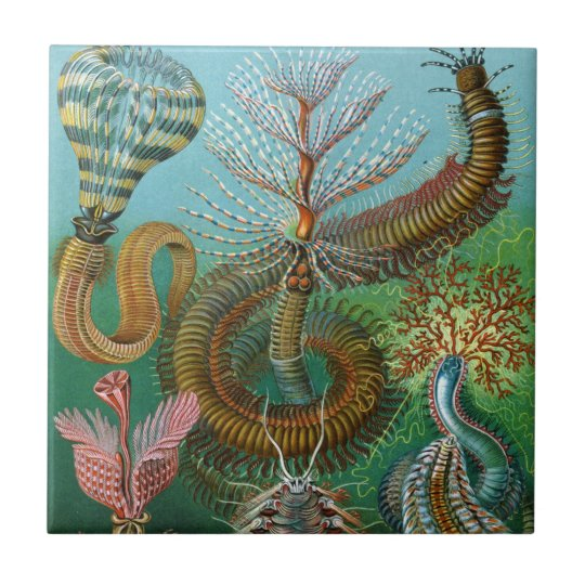 Haeckel Sea Worms Ceramics Tile