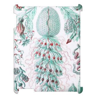 Haeckel Siphonophorae iPad Cover