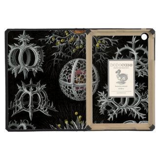 Haeckel Stephoidea iPad Mini Covers
