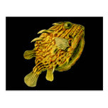 Haeckel Striped Cowfish Fine Vintage Animal