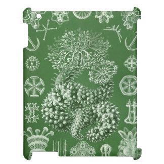 Haeckel Thuroidea iPad Case