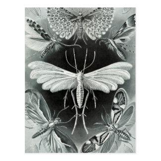 Haeckel Tineida Postcard