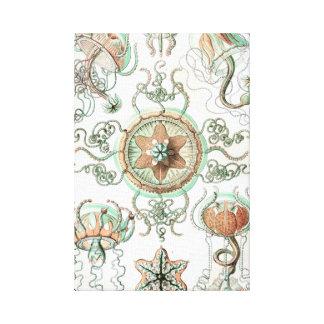 Haeckel Trachomedusae Canvas Print