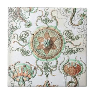Haeckel Trachomedusae Ceramic Tile