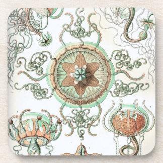 Haeckel Trachomedusae Coaster