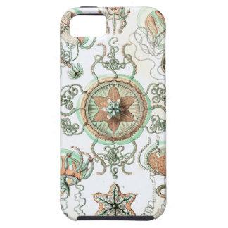 Haeckel Trachomedusae Cover For iPhone 5/5S