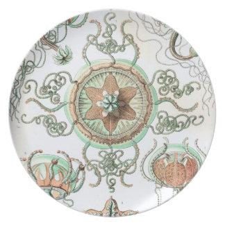 Haeckel Trachomedusae Plate