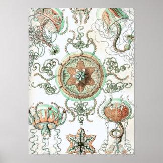 Haeckel Trachomedusae Poster