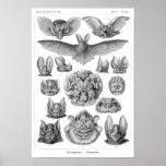 Haeckel's Bats Posters