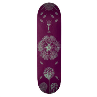 Haeckel's Purple 20 Cm Skateboard Deck