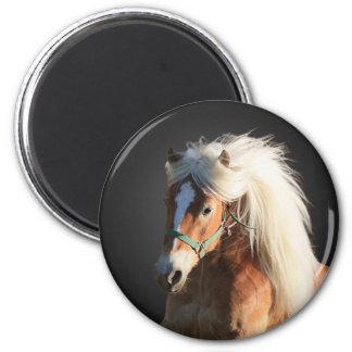 Haflinger Horse 6 Cm Round Magnet