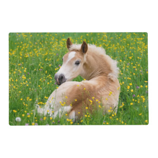 Haflinger Horse Cute Foal in a Flowerbed Gloss Mat Laminated Place Mat