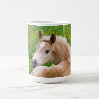 Haflinger Horse Cute Foal in a Flowerbed Photo _ Coffee Mug