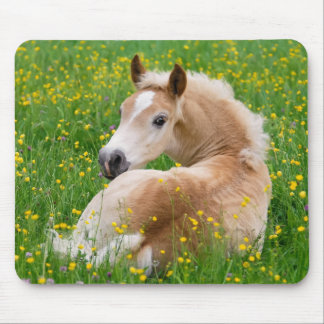 Haflinger Horse Cute Foal in a Flowerbed, Supply Mouse Pad