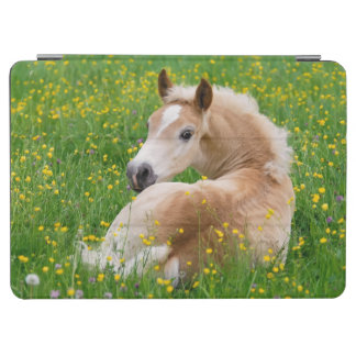 Haflinger Horse Foal Resting Flowerbed Gadgetcover iPad Air Cover