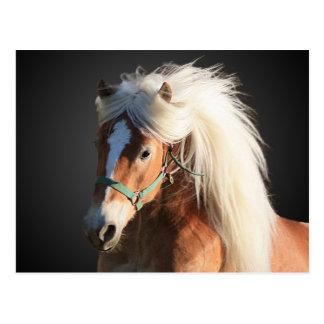 Haflinger Horse Postcard