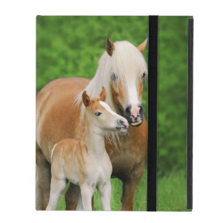 Haflinger Horses Cute Foal Kiss Mum Photo Hardcase Case For iPad