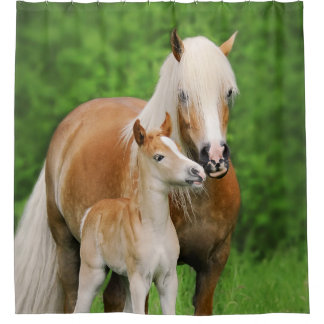 Haflinger Horses Cute Foal Kiss Mum Photo - Tub Shower Curtain