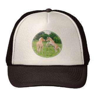 Haflinger horses cute foals rearing hat