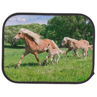 Haflinger Horses with Cute Foals Run Funny Photo . Car Mat