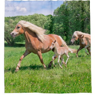 Haflinger Horses with Cute Foals Run Funny Photo - Shower Curtain