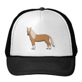 Haflinger stands cap