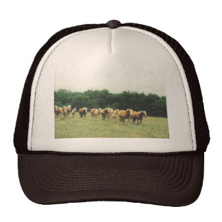 Haflingers Cap