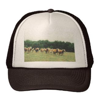 Haflingers Cap Hat