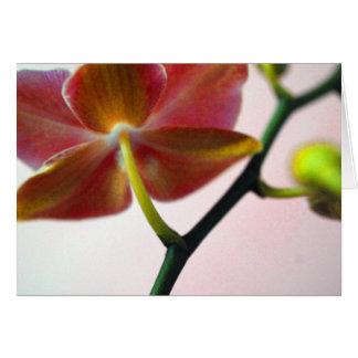 Haiku Orchid Card