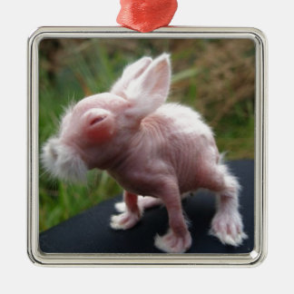 Hairless bunny Silver-Colored square decoration