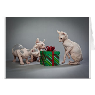 HAIRLESS CAT'S CHRISTMAS CARD